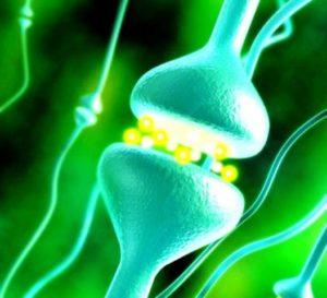 Синапс в головном мозге при эпилепсии