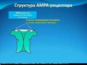 Структура AMPA-рецептора