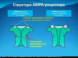 АМРА - рецептор открыт