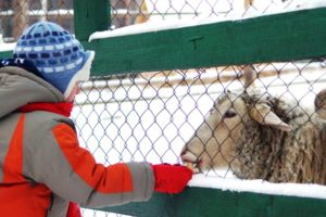 Мини зоопарк в Томской писанице