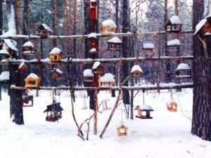 Птичьи домики в Томской писанице