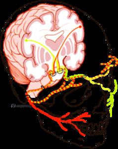 Топографическая анатомия лицевого нерва