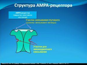 АМРА -рецептор