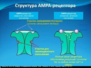 АМРА - рецептор закрыт